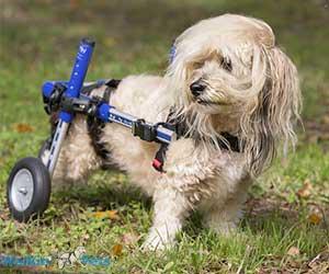 Walkin' Wheels Small Rear Wheelchair