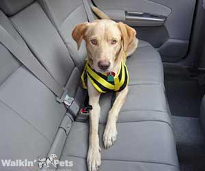 Walkin' Front Safety Harness